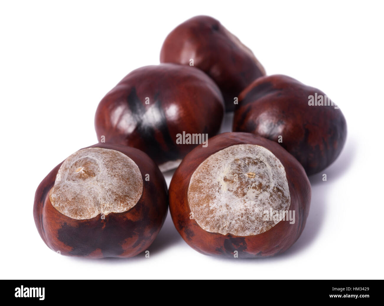 horse-chestnut conkers isolated on white background - Stock Image