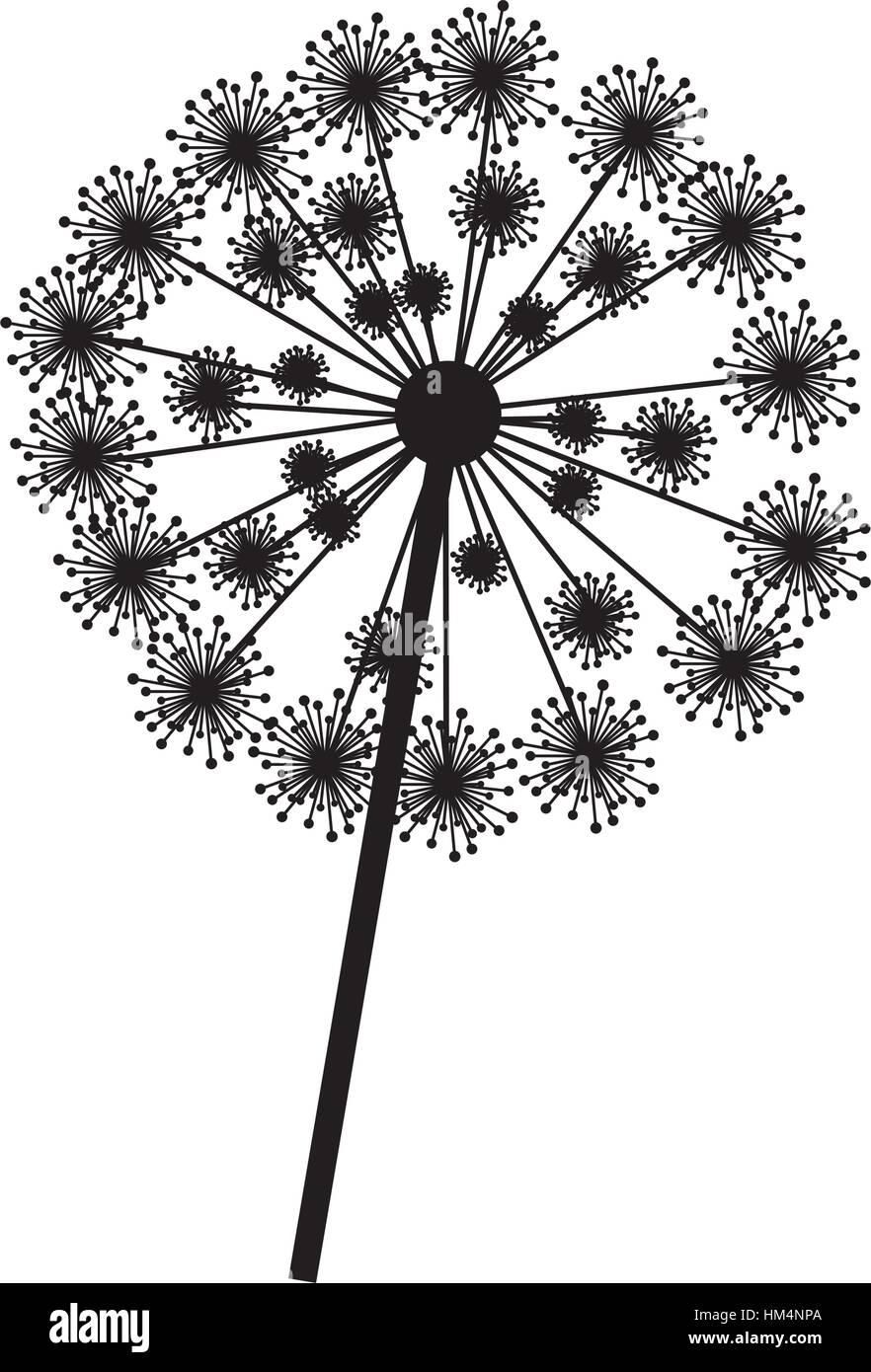 silhouette dandelion with stem and pistil closeup vector illustration Stock Vector
