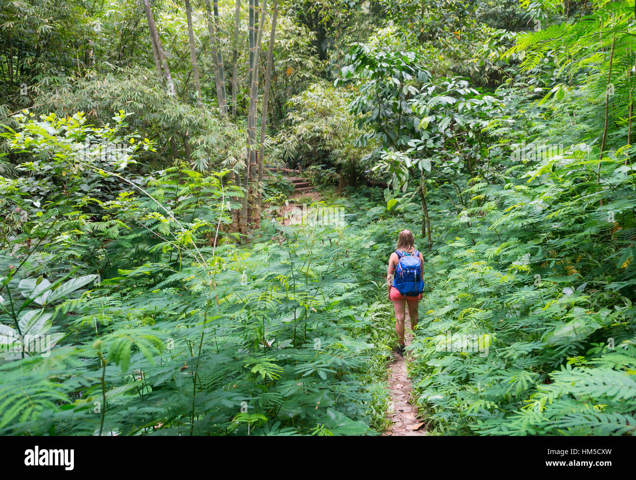Hiker walking on trail through dense vegetation, Munduk, Bali, Indonesia - Stock Image