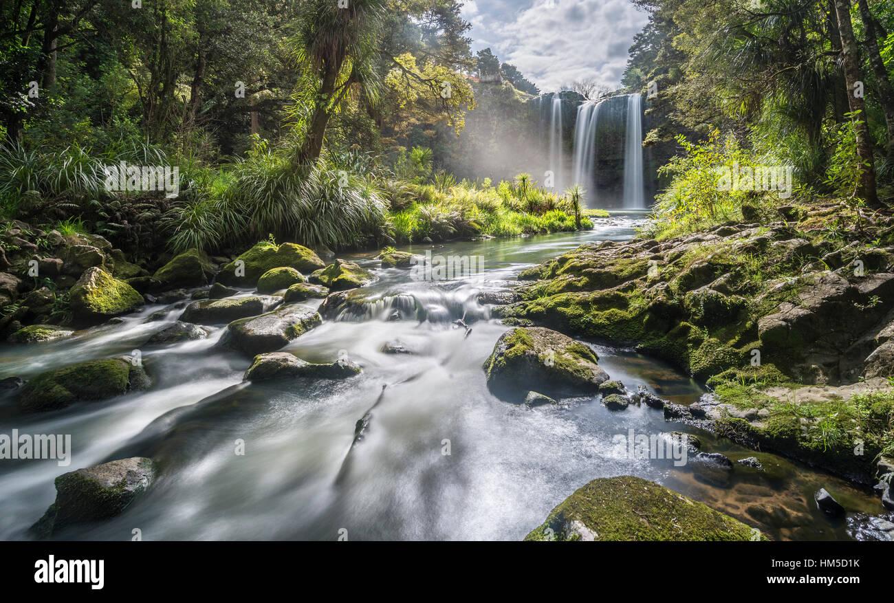Whangarei Waterfall, temperate rainforest, Whangarei, Northland, North Island, New Zealand - Stock Image
