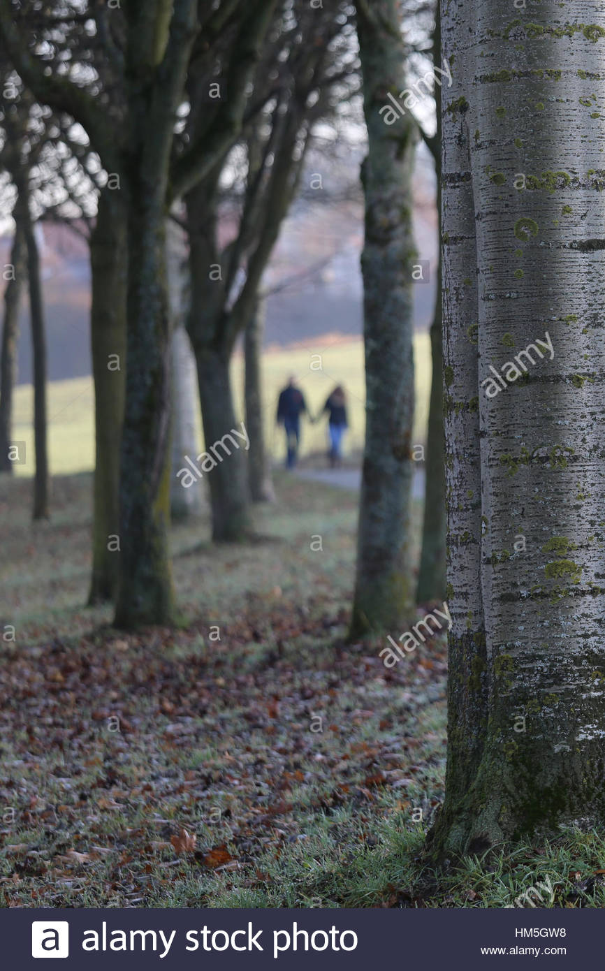 Trees on a misty afternoon in Bavaria, Germany - Stock Image
