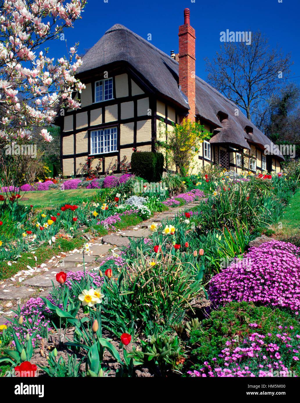 Thatched and timbered cottage with Spring flowers near Ledbury, Herefordshire, England, UK - Stock Image
