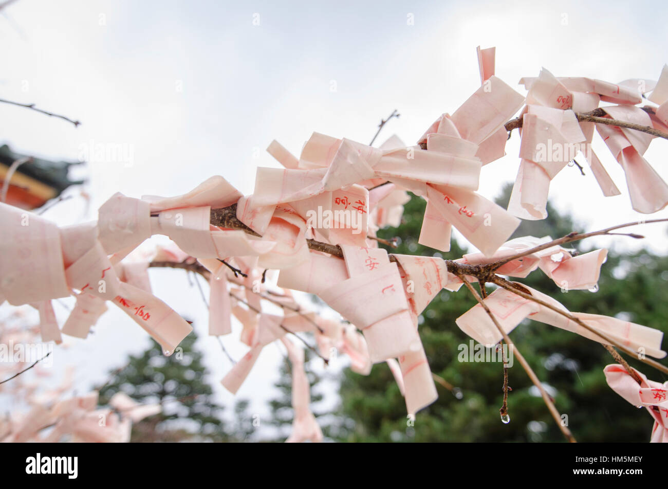 Low angle view of fortune papers tied on twigs against sky - Stock Image