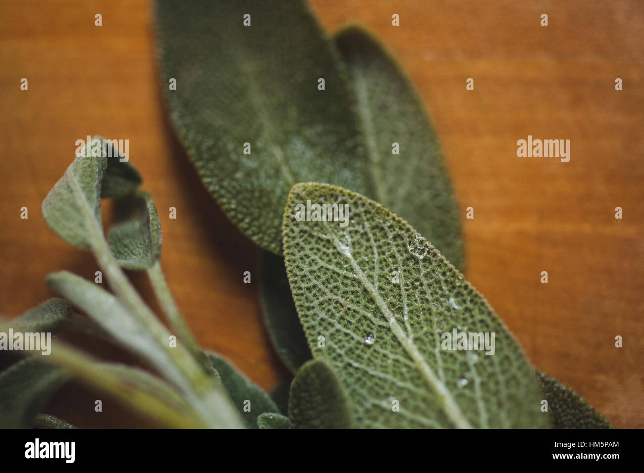 Close-up of herbs on wooden table - Stock Image