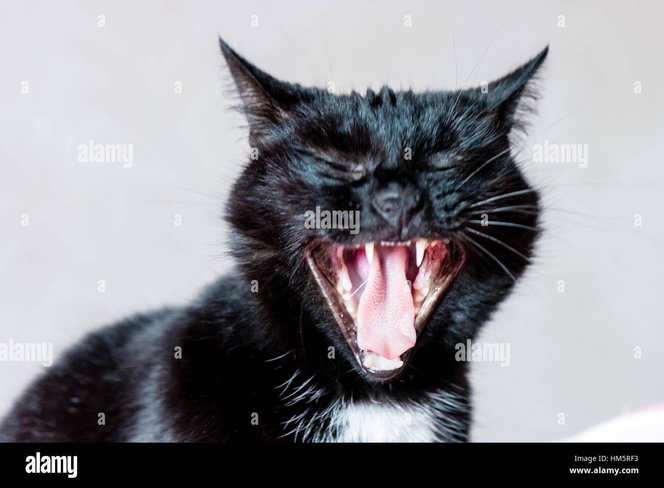 domestic cat sleeping close-up shot - Stock Image