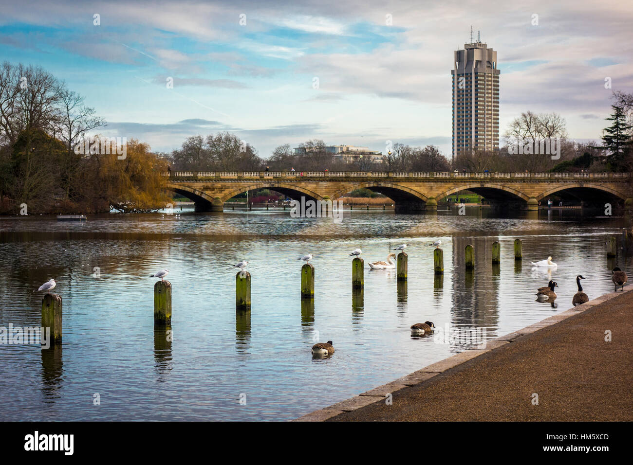 The Long Water Kensington Gardens with Basil Spence's tower (Hyde Park Barracks) in the background, London, - Stock Image
