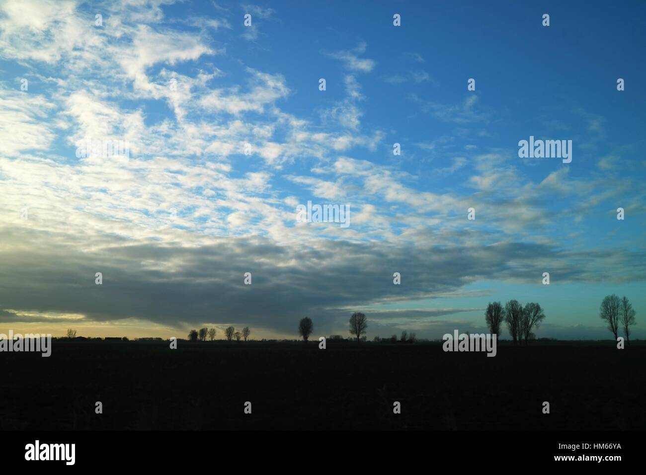 trees in the distance with a cloudy sky - Stock Image