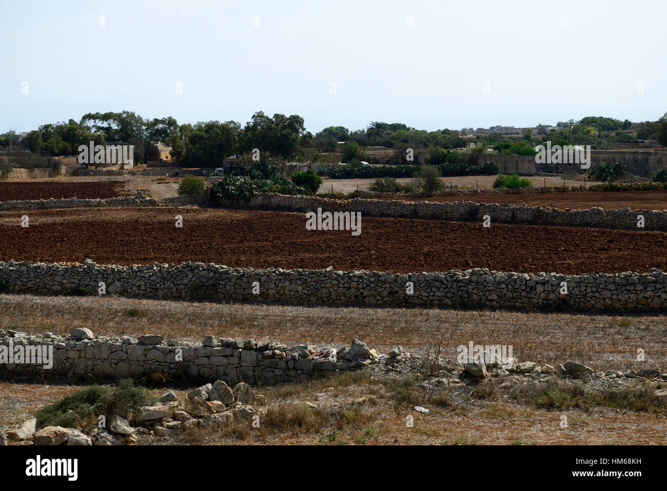 stone walls fields farm farming subsistence poor agriculture land agricultural soil Malta Mediterranean dry drought - Stock Image