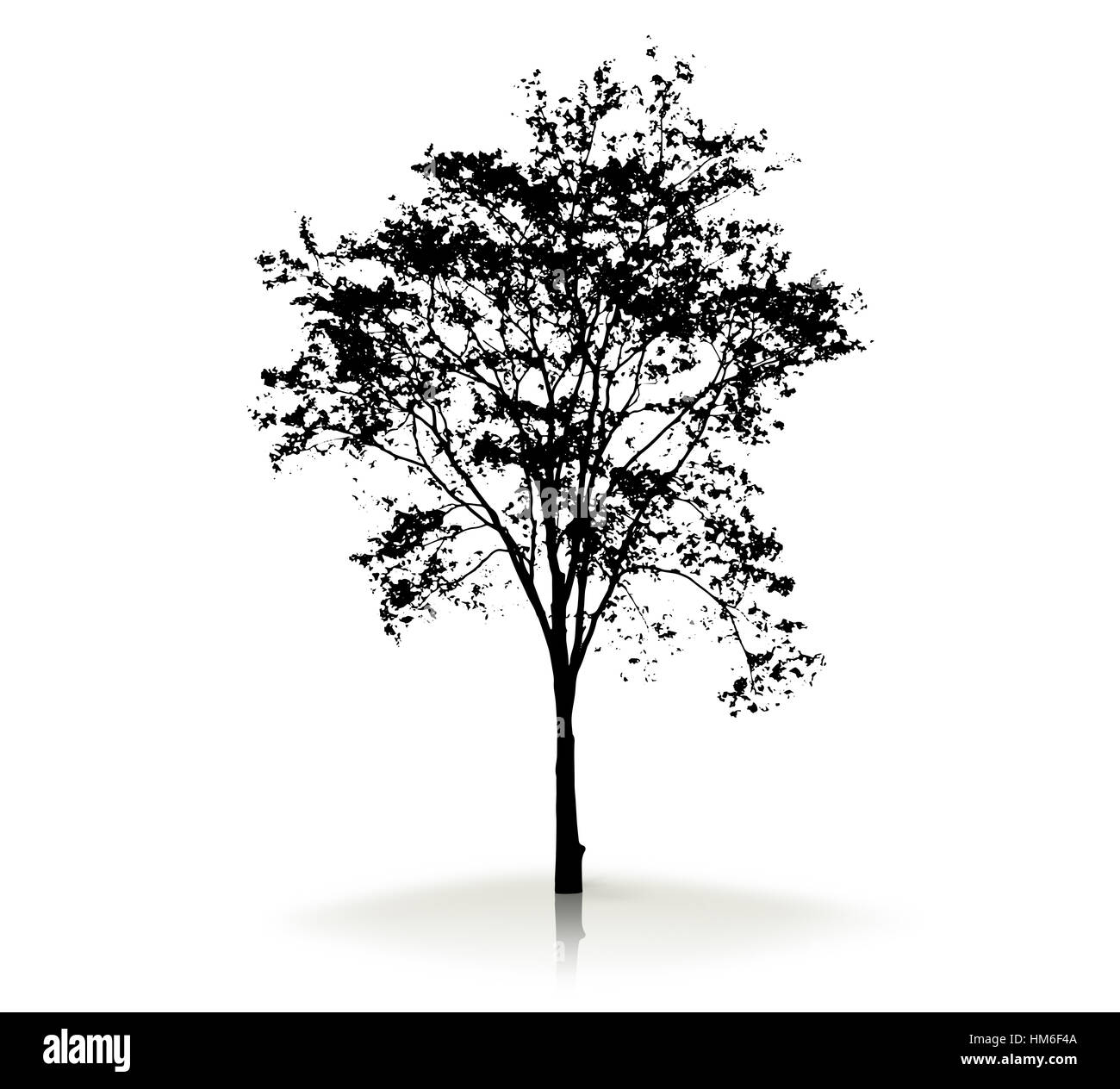 Tree silhouette on white background - Stock Image