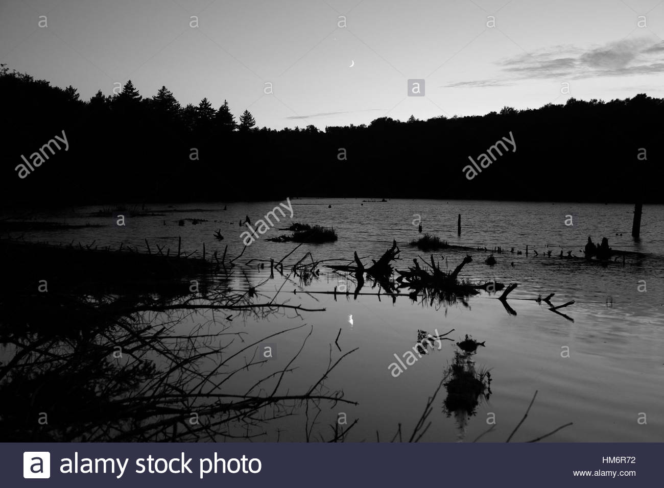Beaver pond at dusk with reflection of the moon rising in the distance over the tree line monochrome Stock Photo