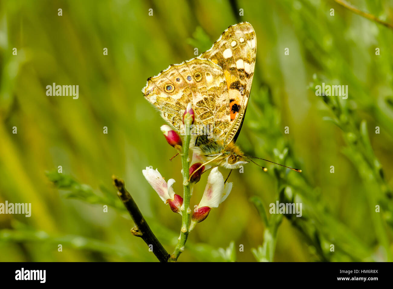 Close up on butterfly - Stock Image