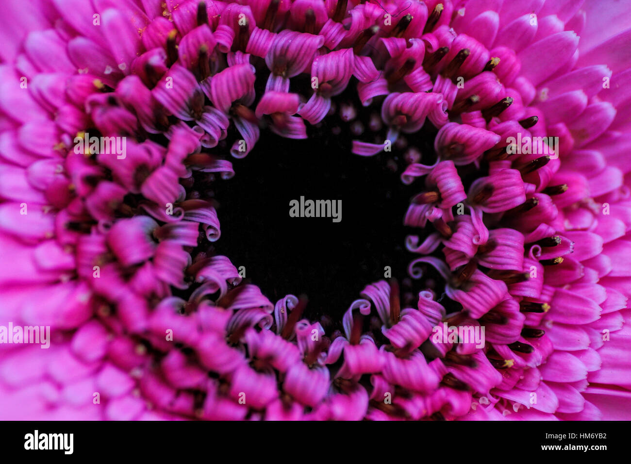 Hot Pink Flower Stock Photos Hot Pink Flower Stock Images Alamy