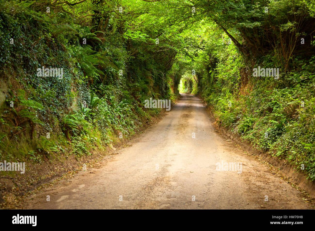 An overgrown sunken road/green way in Symondsbury, Dorset, England. - Stock Image