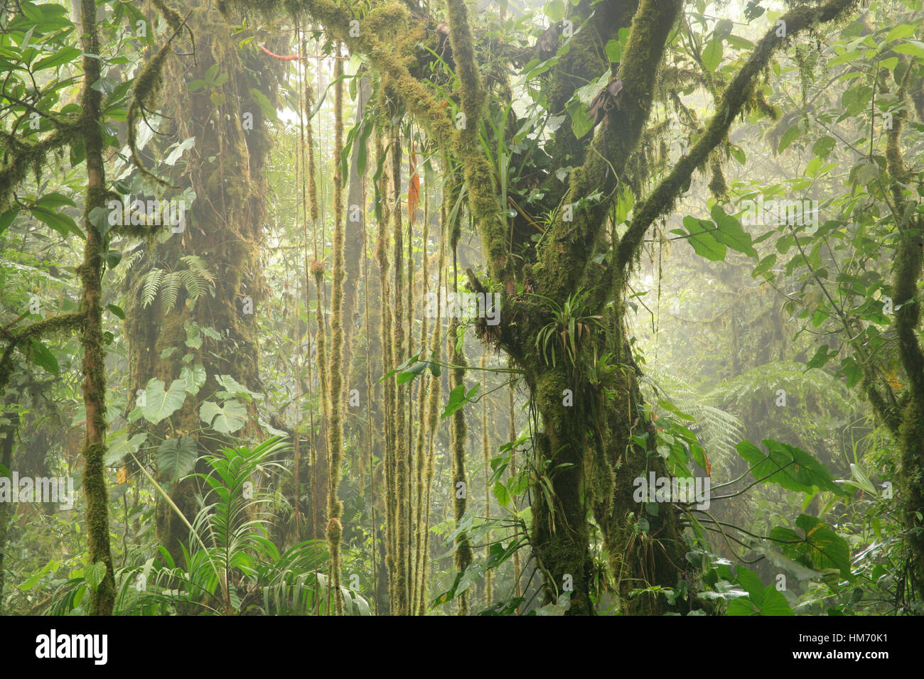 Monteverde Cloud Forest Preserve, Costa Rica - Stock Image