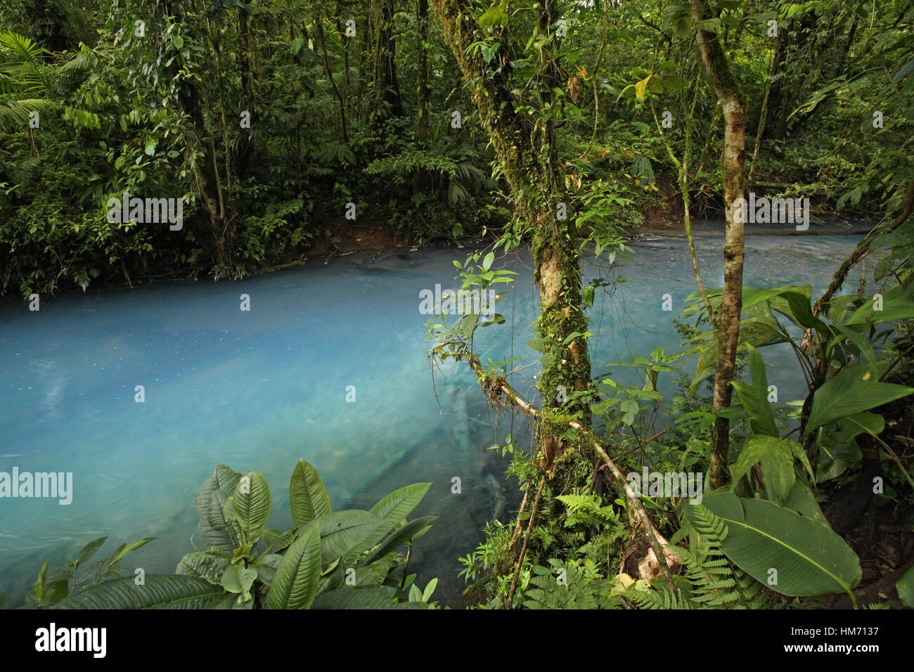 Rio Celeste (Blue River) in Tenorio Volcano National Park, Costa Rica. The blue coloration is a result of sulphur - Stock Image