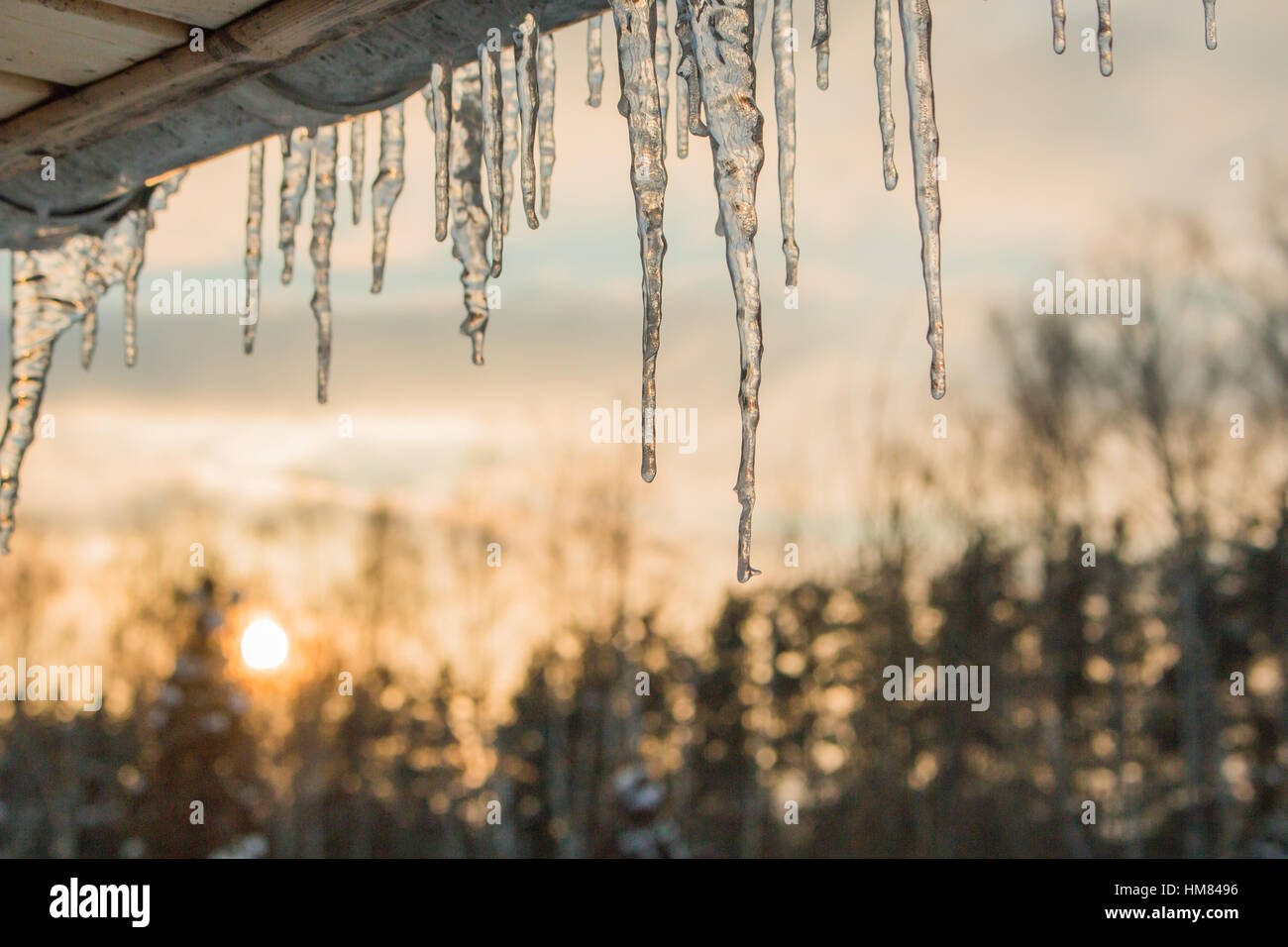 beautiful icicles shine in sun against blue sky. spring ... on leaf house plant, ant house plant, steel house plant, lazarus house plant, banana house plant, marijuana house plant, lemon house plant, avocado house plant, jade house plant, sword house plant, dolphin house plant,