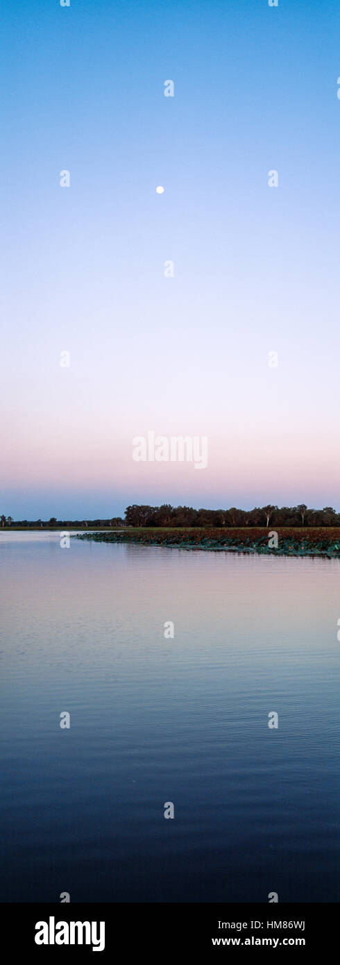 Moonrise over a still floodplain in the dry season. Stock Photo