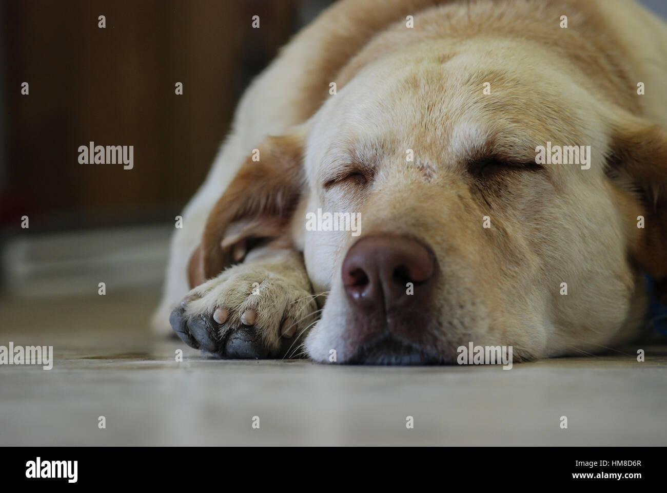 sleepy dog - Stock Image