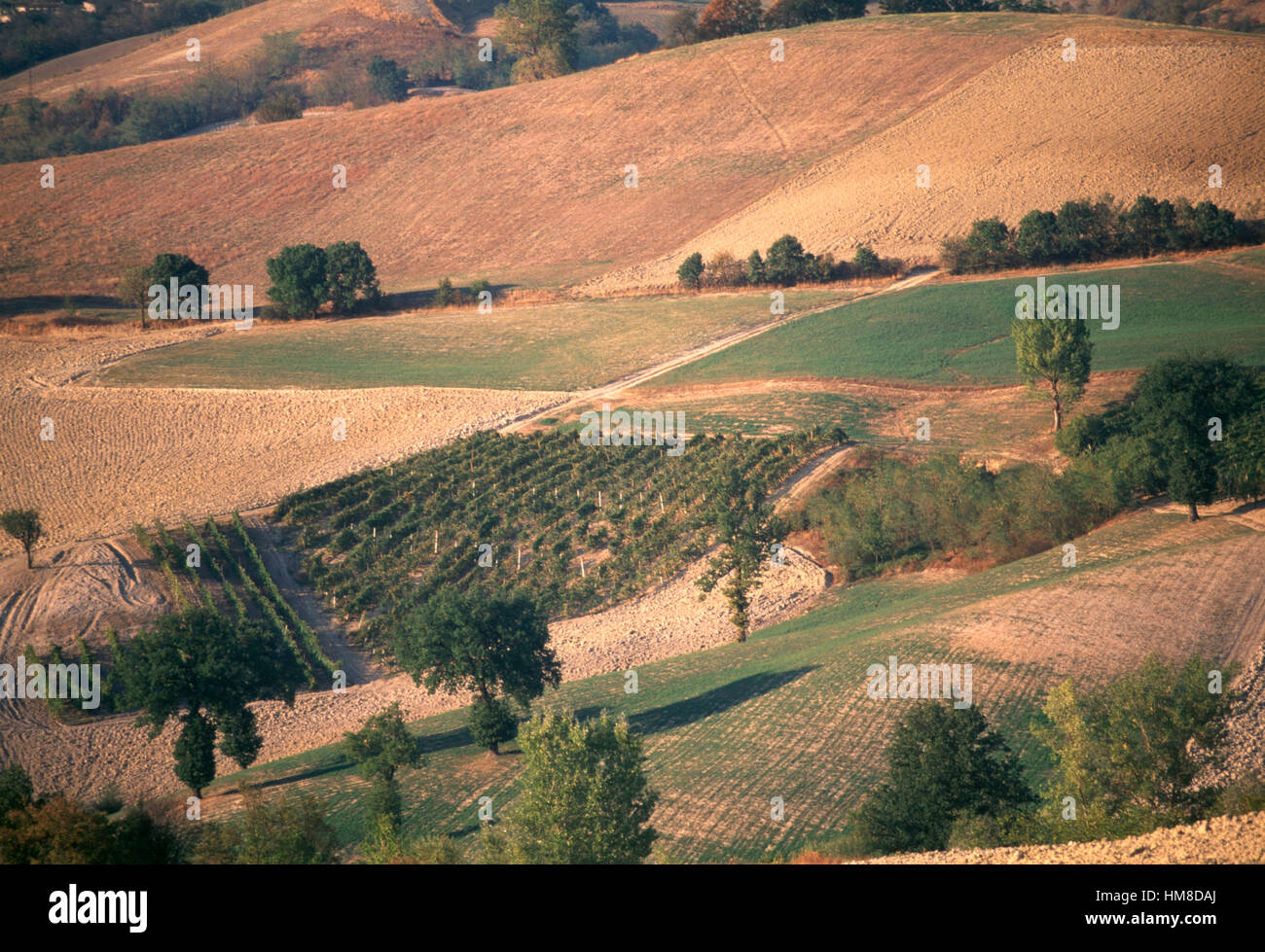 Agricultural landscape between Castel San Pietro Terme and Sassoleone, Emilia-Romagna, Italy. - Stock Image