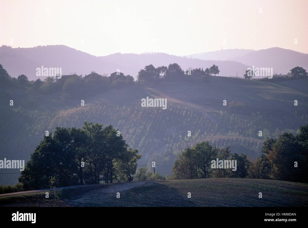 Agricultural landscape and trees between Castel San Pietro Terme and Sassoleone, Emilia-Romagna, Italy. - Stock Image