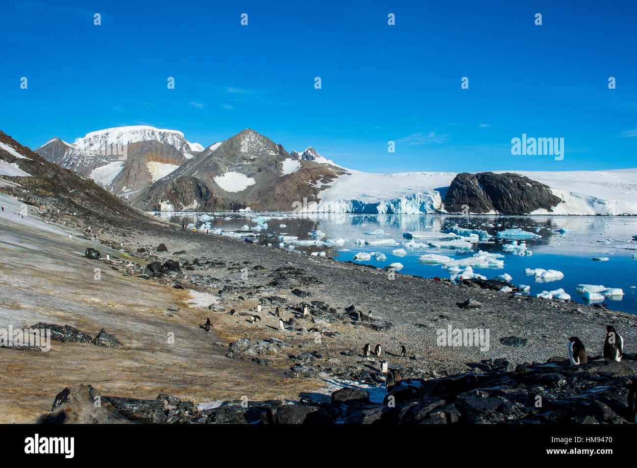 Adelie penguin (Pygoscelis adeliae) colony in Hope Bay, Antarctica, Polar Regions - Stock Image