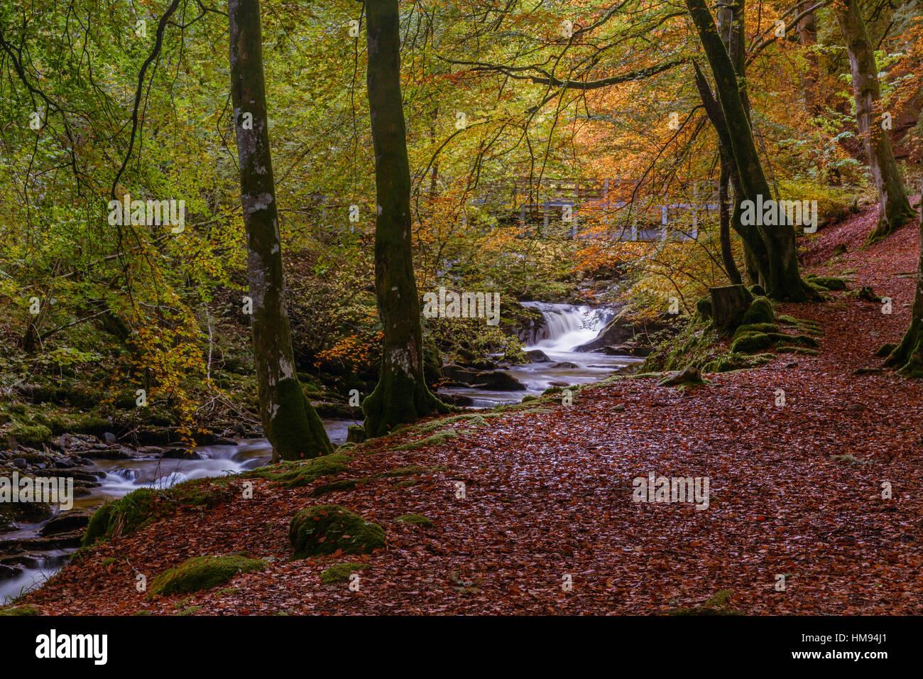 Autumn in the Birks of Aberfeldy, Scottish Highlands, Scotland, United Kingdom - Stock Image