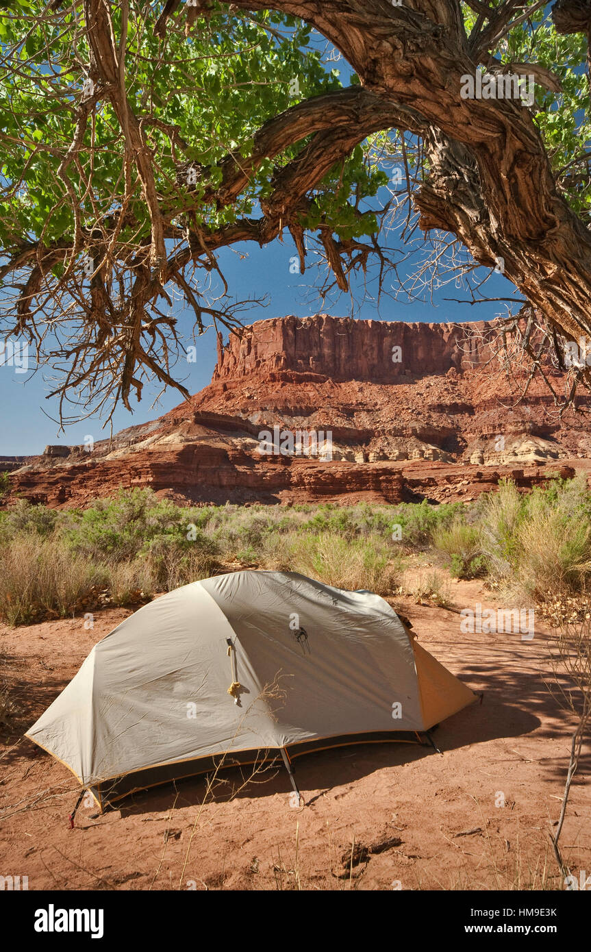 Campsite under cottonwood tree, Potato Bottom Camp, Bighorn Mesa in distance, White Rim Road area, Canyonlands National - Stock Image