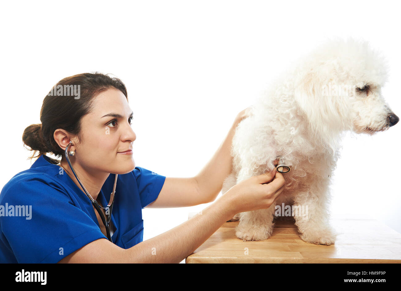 woman veterinarian checking heath of dog isolated on white Stock Photo