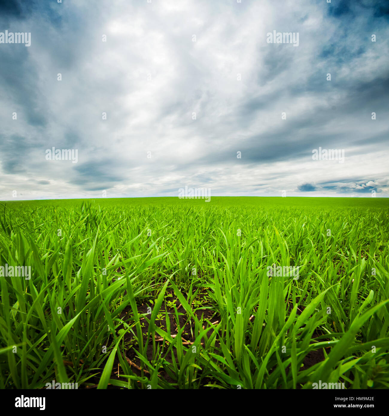 dramatic sky over green field - Stock Image