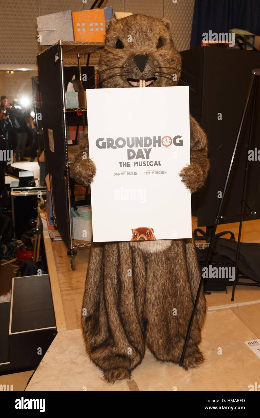 New York, USA. 2nd Feb, 2017. The Groundhog in attendance for GROUNDHOG DAY: THE MUSICAL on Broadway Sneak Peek, - Stock Image