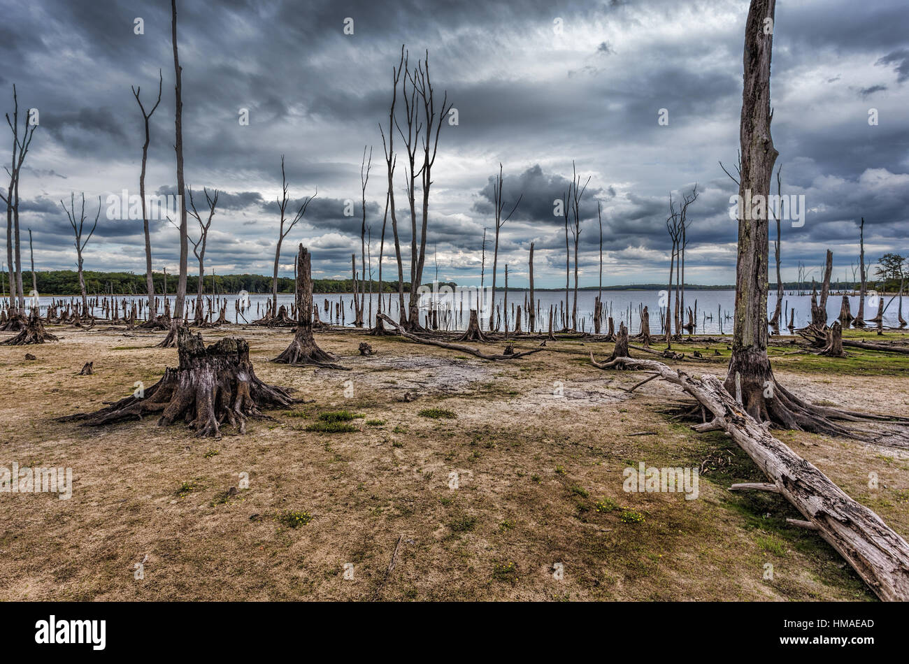 Dead Trees in the forest around a lake with low water levels. This photo depicts drought conditions and Climate - Stock Image