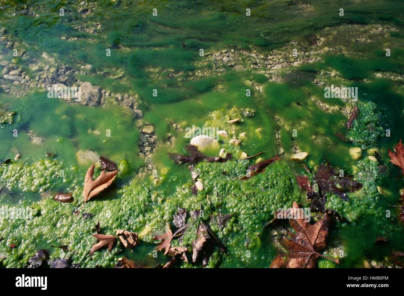 Moss and stagnant water, Acheron river, Greece. Stock Photo
