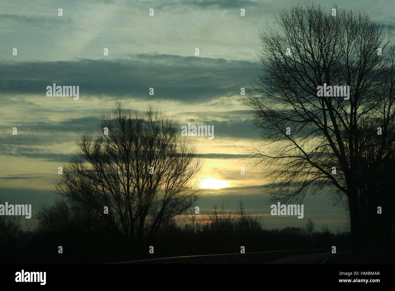 trees in a row during sunset,/sunrise - Stock Image