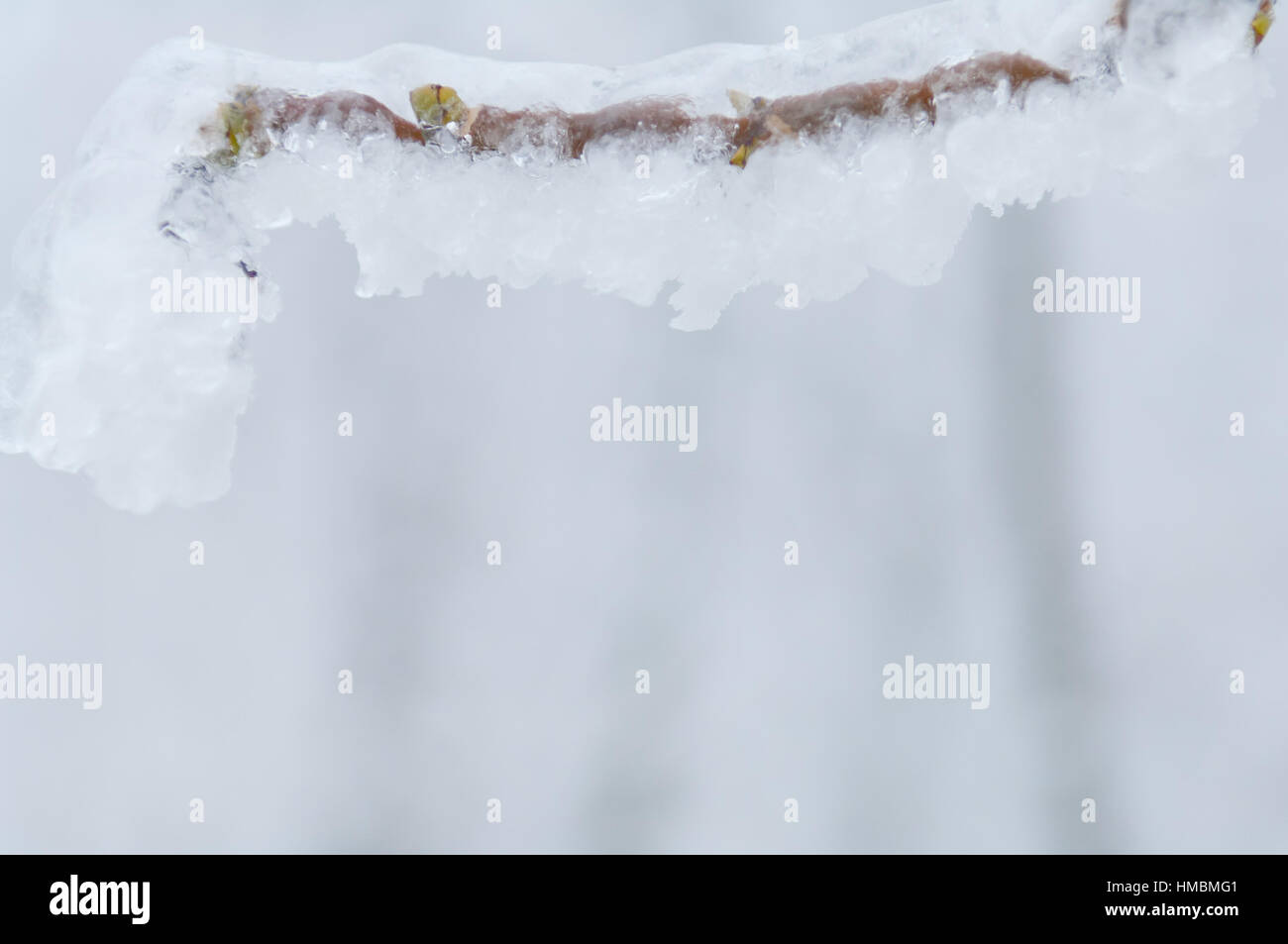 Freezing rain or sleet covered the trees and branches - Stock Image
