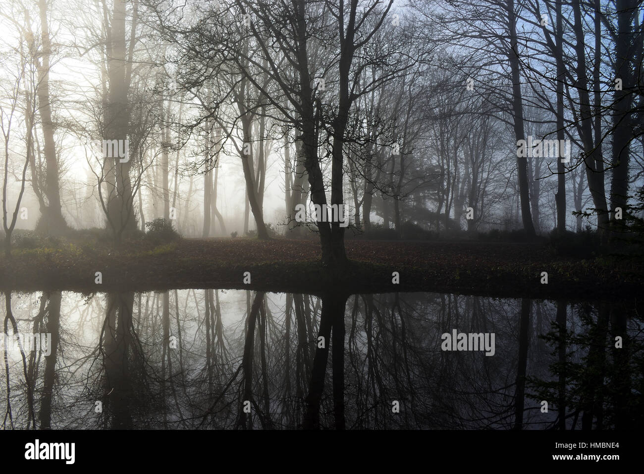 Misty Trees - Stock Image