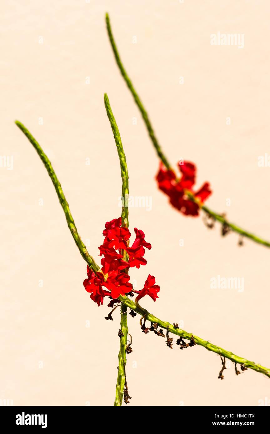 Stems with Flowers. - Stock Image