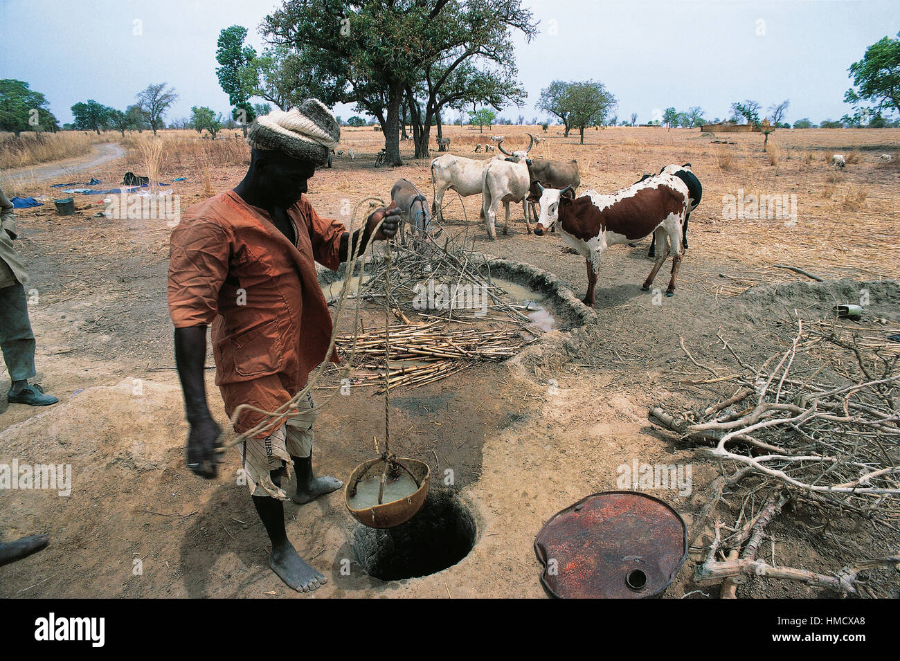 Man drawing water from a well with cattle, Burkina Faso. - Stock Image