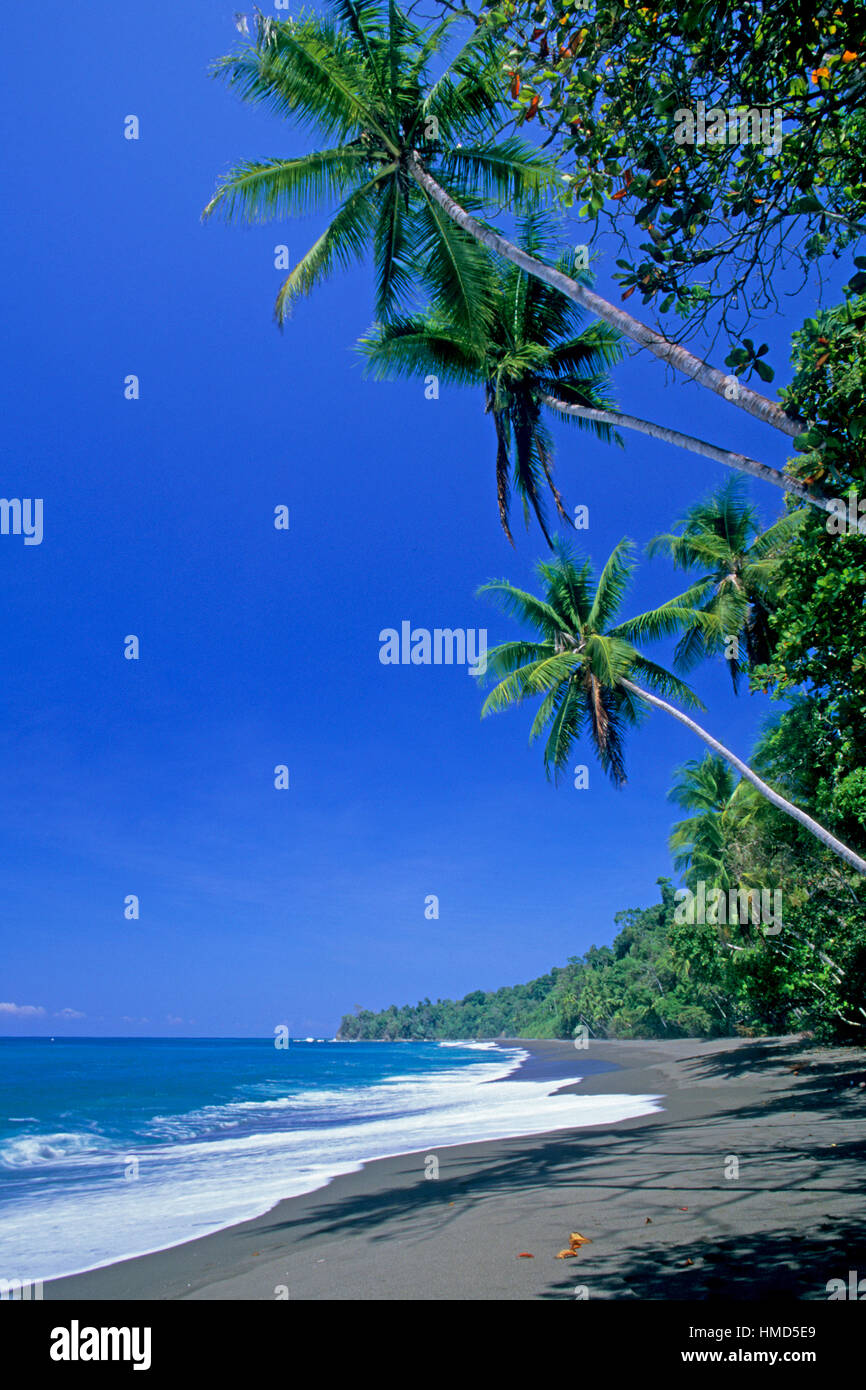 Beach and rainforest in Corcovado National Park, Osa Peninsula, Costa Rica. - Stock Image