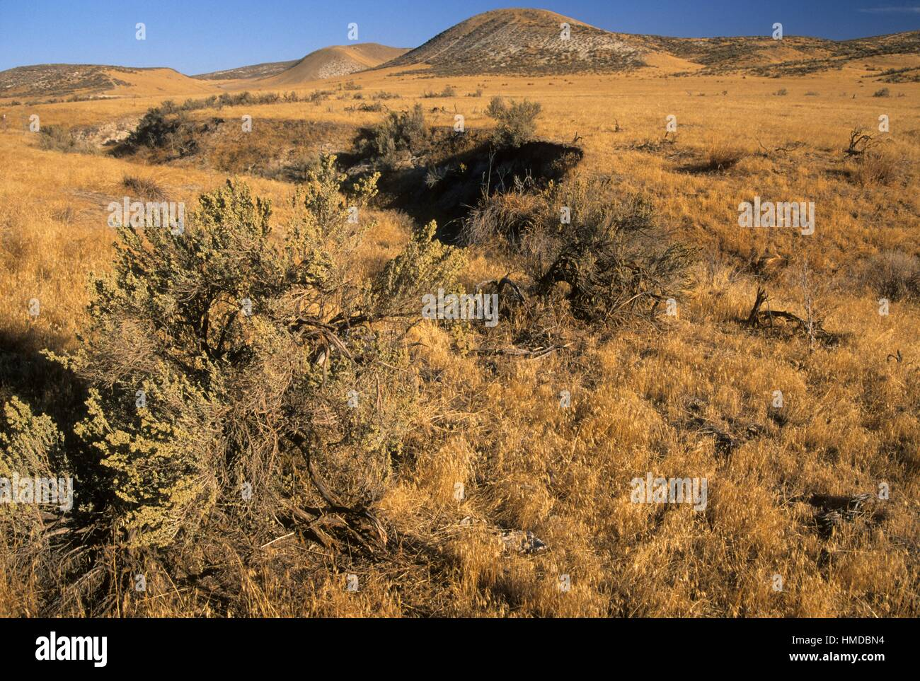 oregon trail ruts stock photos oregon trail ruts stock images alamy. Black Bedroom Furniture Sets. Home Design Ideas