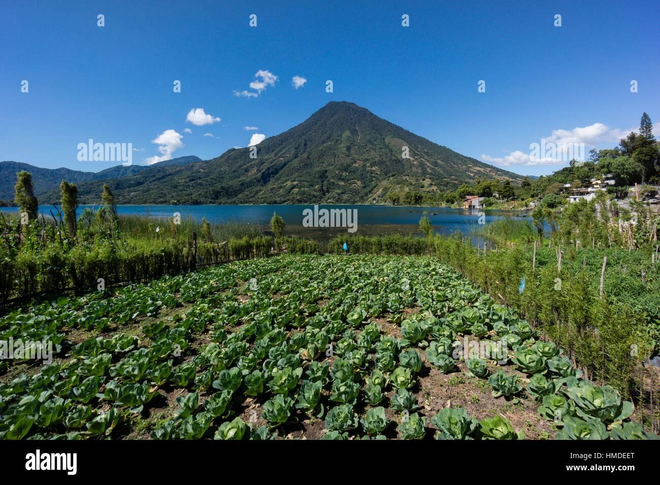 volcán San Pedro, suroeste de la caldera del lago de Atitlán , Santiago Atitlán. Tiene una altitud - Stock Image
