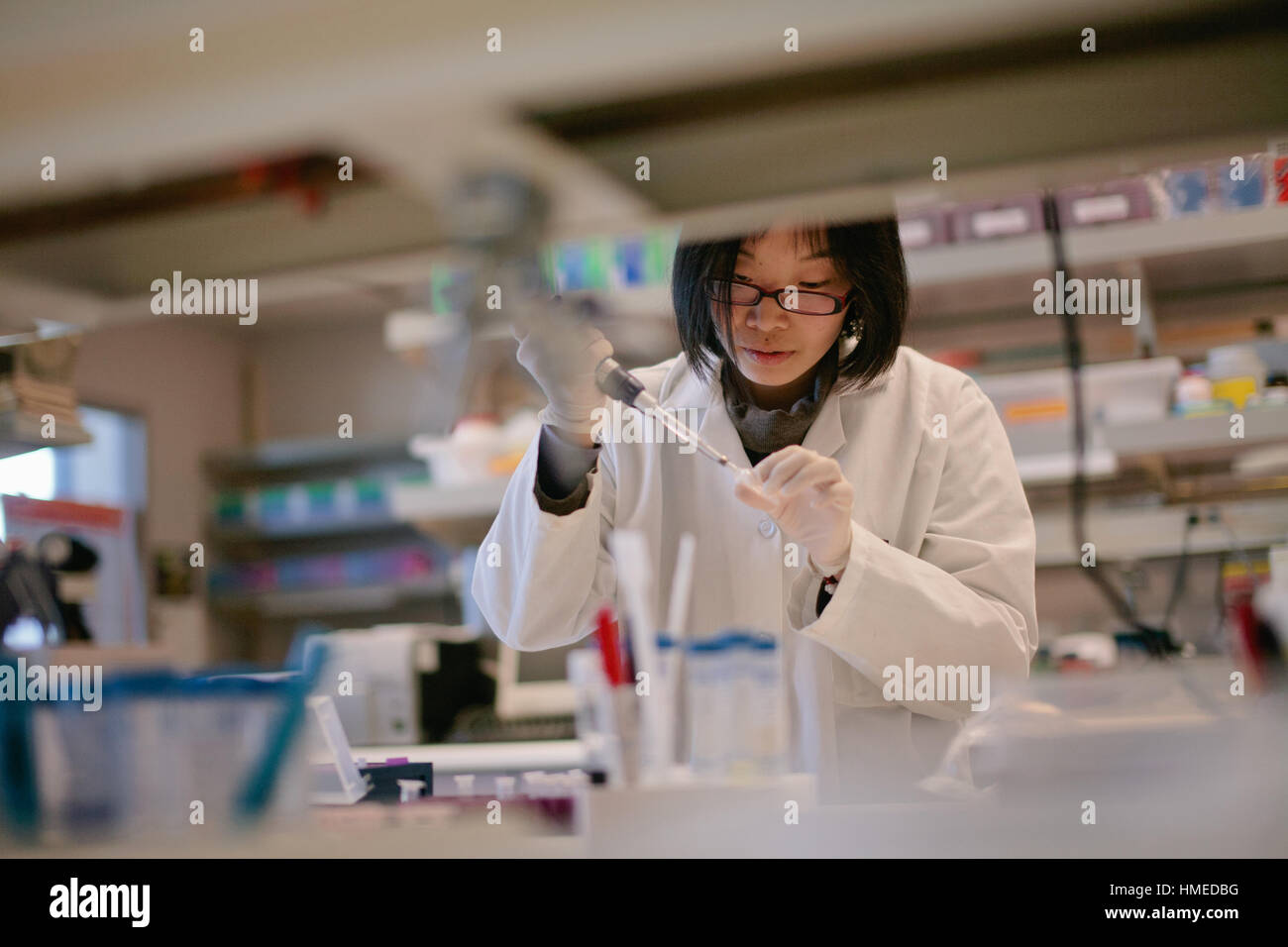 Asian Scientist Pipetting at a Biomedical Laboratory - Stock Image