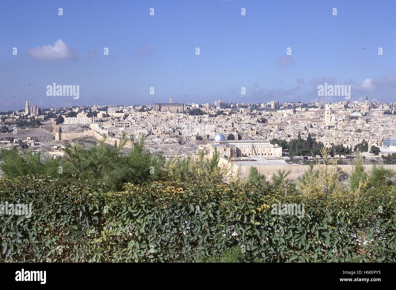Panoramic southern view of the buildings and towers of the Old City of Jerusalem, Israel, with native foliage in - Stock Image