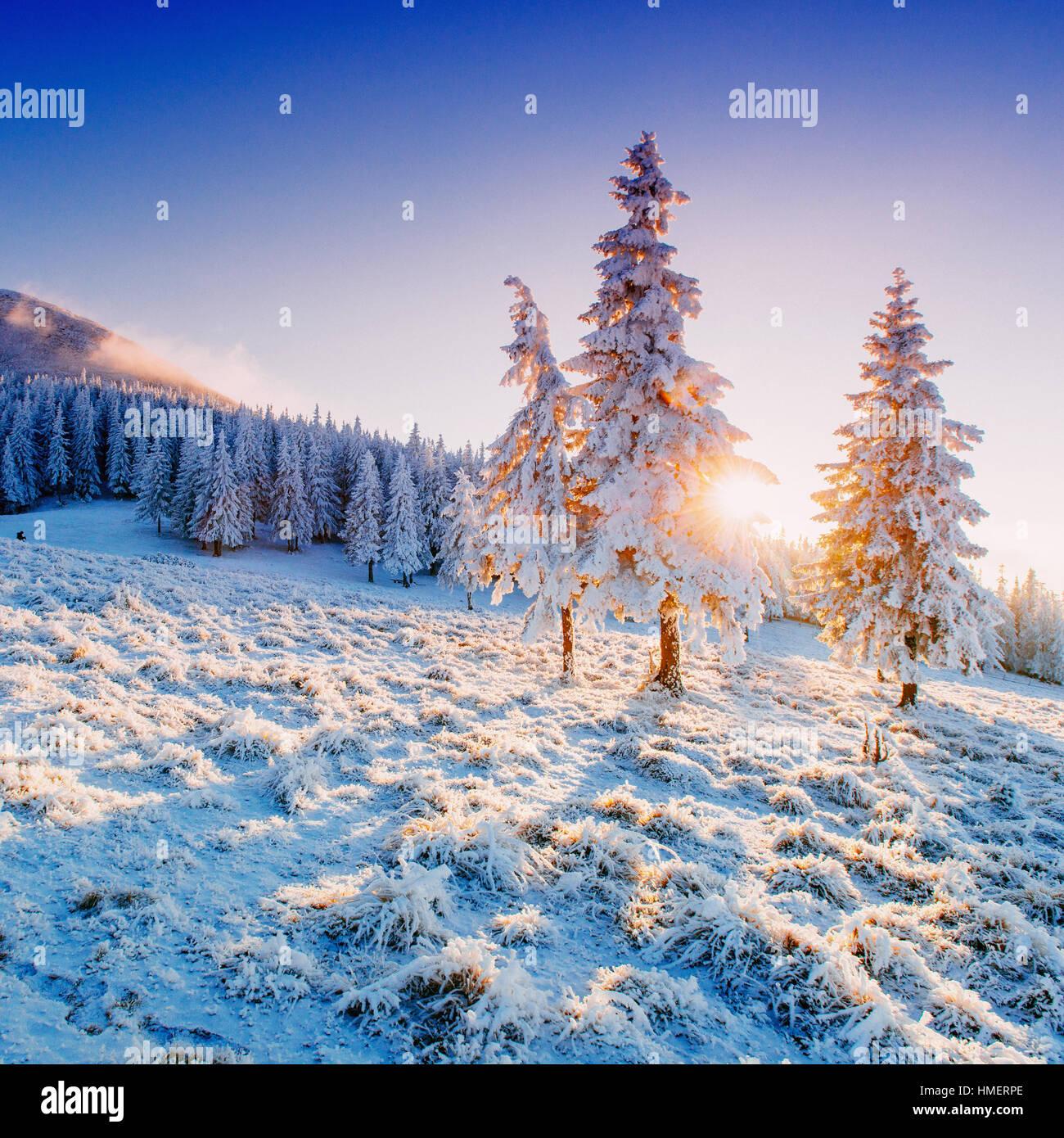 sunny winter landscape Stock Photo