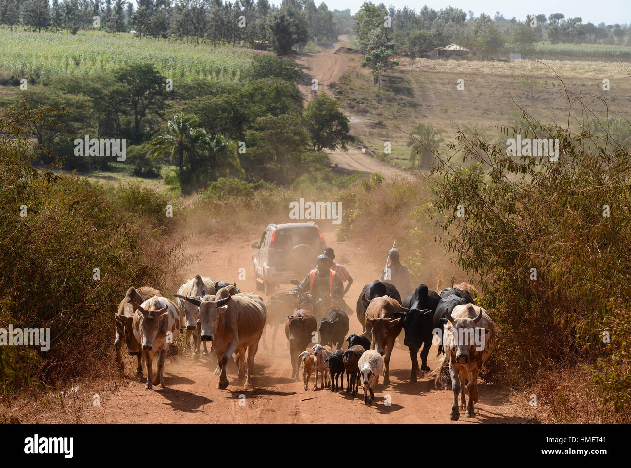 KENIA, Mount Kenya East, Region South Ngariama , extreme drought due to lack of rain has caused massive water problems, - Stock Image