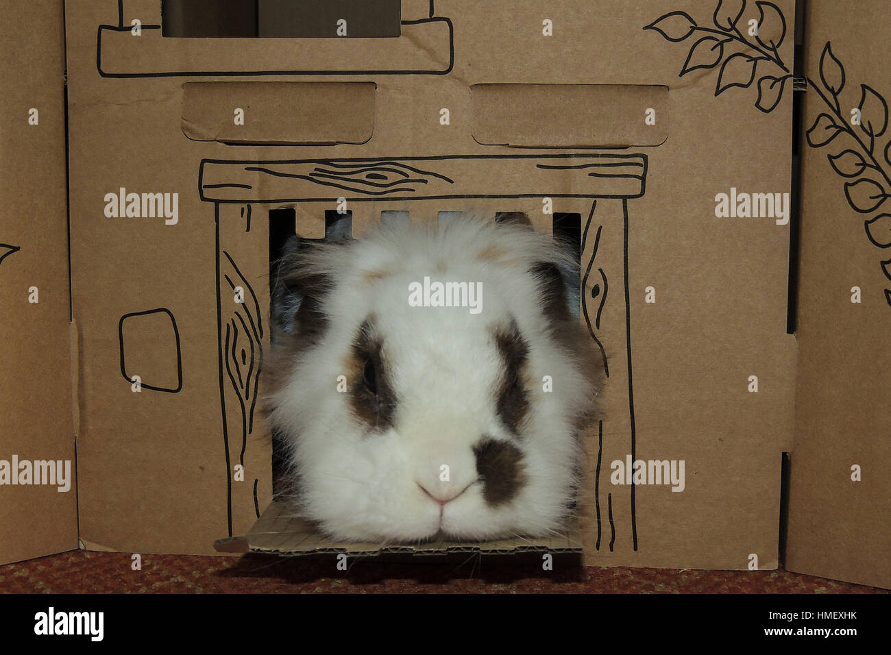 Small Lionhead rabbit with brown spots round eyes and on side of nose looking out of cardboard castle Stock Photo