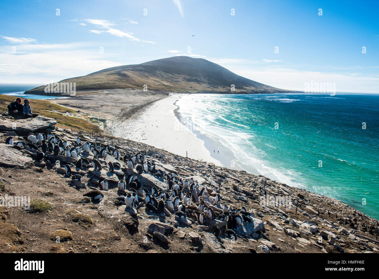 Southern rock hopper penguin colony (Eudyptes chrysocome) with the Neck isthmus in the background, Saunders Island, - Stock Image