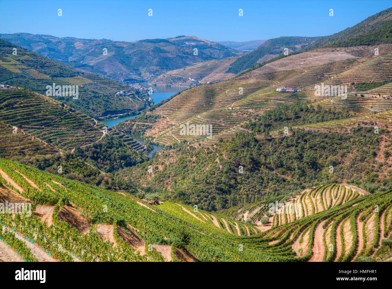Vineyards and the Douro River, Alto Douro Wine Valley, Portugal - Stock Image