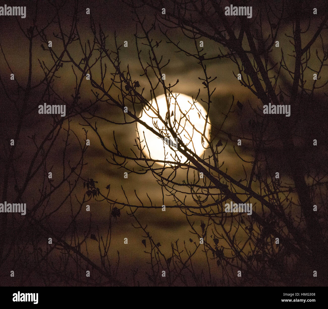 Moon Clouds Tree Stock Photos Amp Moon Clouds Tree Stock