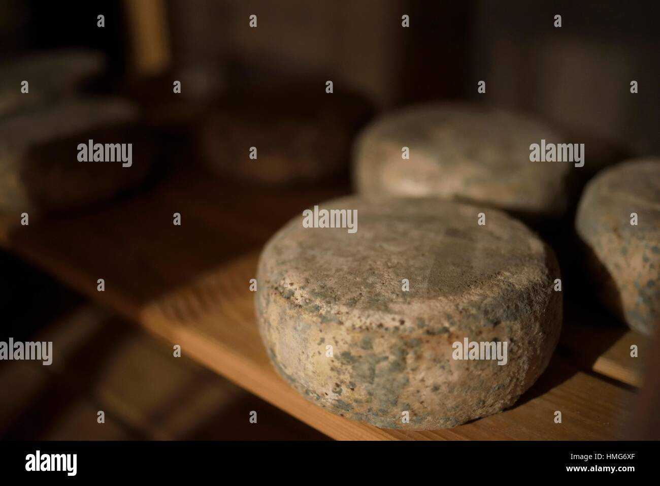 Artisan cheese maturing indoor. North valleys of Spain. - Stock Image