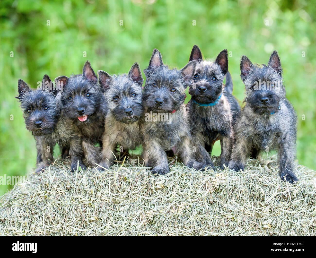 Akc Dog Show Stock Photos & Akc Dog Show Stock Images - Alamy